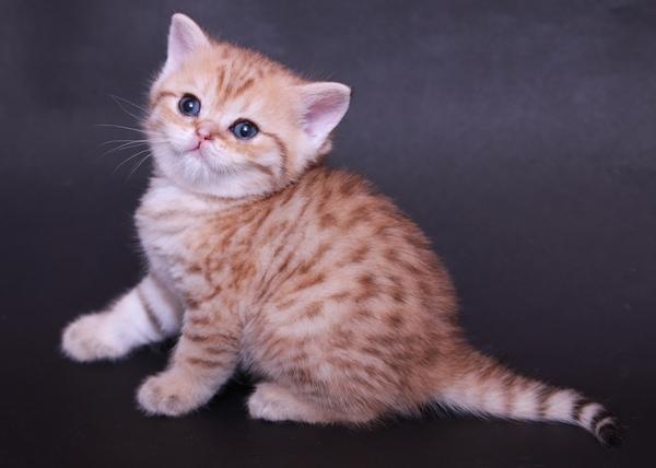 Не опасны ли прививки котятам